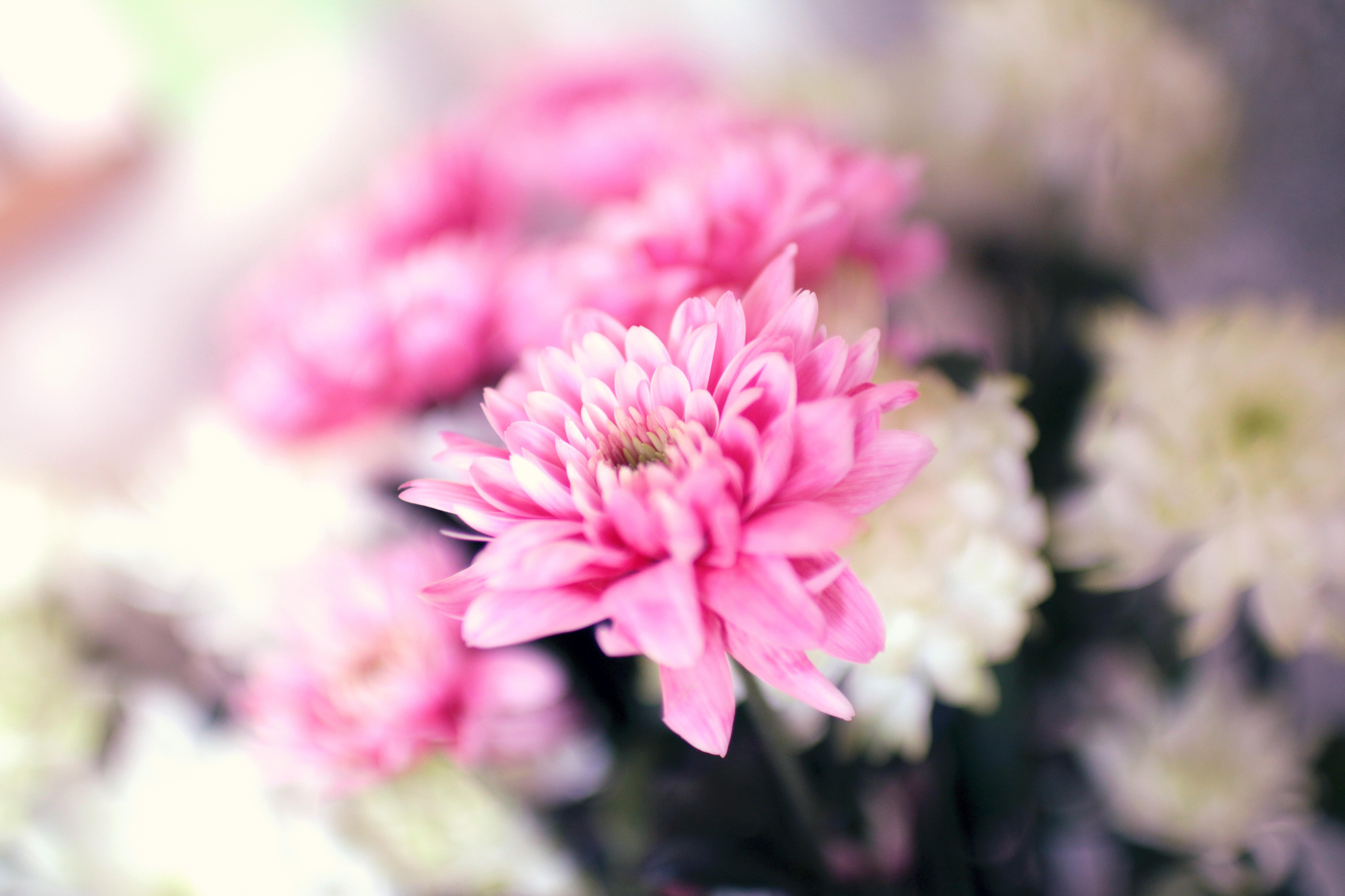 summer-spring-flower-pink